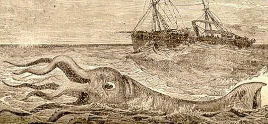 Calamaro-gigante