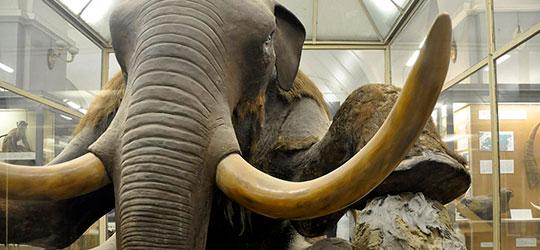 Mammut Beresovka