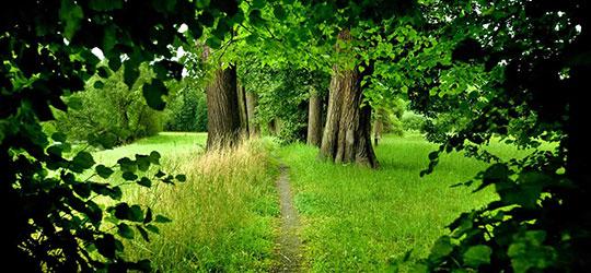 Wicca Religione della Natura