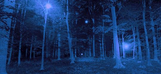 Foresta di Rendlesham